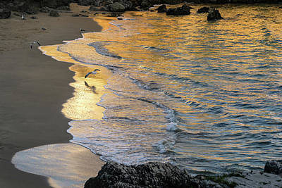 Photograph - Magic Hour Golden Waves And Seagulls by Georgia Mizuleva