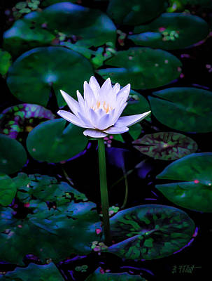 Photograph - Magic Lily by Bonnie Follett