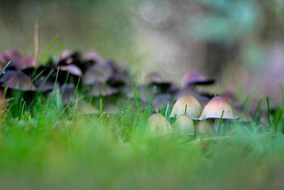 Photograph - Magic Mushrooms 1 by Tracy Male