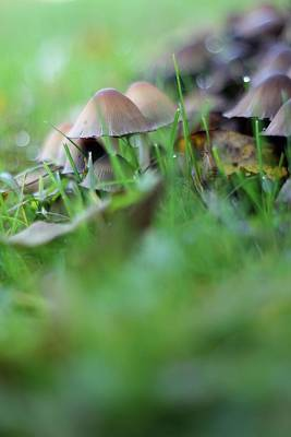 Photograph - Magic Mushrooms 2 by Tracy Male