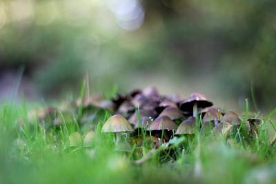 Photograph - Magic Mushrooms 3 by Tracy Male