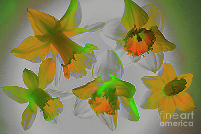 Still Life Royalty-Free and Rights-Managed Images - MAGIC of DAFFODILS # 1. by Alexander Vinogradov