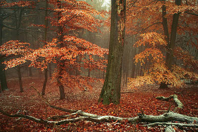 Photograph - Magic Of Fall Woods by Jenny Rainbow