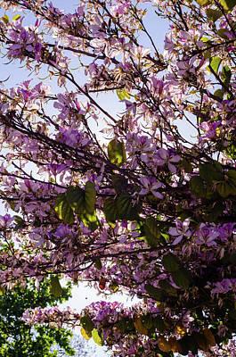 Photograph - Magic Of Spring  by Andrea Mazzocchetti
