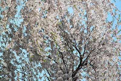 Day Photograph - Magic Of Spring by The Art Of Marilyn Ridoutt-Greene