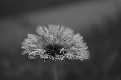 Photograph - Magic Of The Dandelion Lotus 444 by Rae Ann  M Garrett