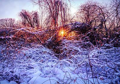 Mixed Media - Magic Of Winter 1 by Lilia D