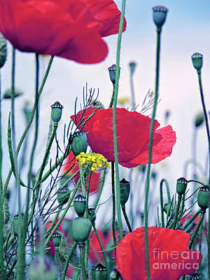 Vibrant Photograph - Magic Poppies by GabeZ Art