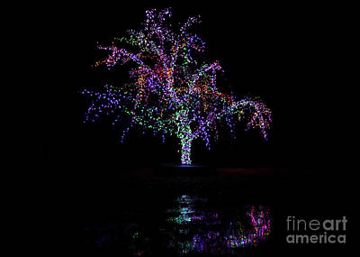 Photograph - Magic Tree by Dennis Hedberg