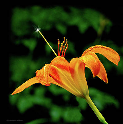 Photograph - Magic Wand - Lily by Michael Taggart II