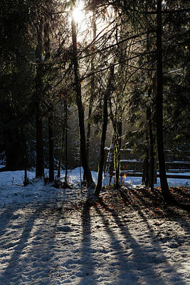 Photograph - Magic Winter Light - 365-289 by Inge Riis McDonald