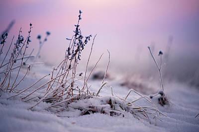 Photograph - Magic Winter Moments 1 by Jenny Rainbow
