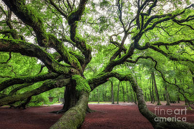 Photograph - Magical Angel Oak Tree  by Michael Ver Sprill