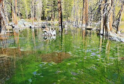 Photograph - Magical Beaver Pond  by Sean Sarsfield