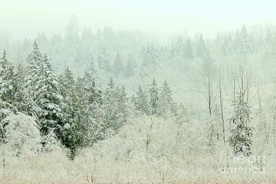 Photograph - Magical Dusting by Frank Townsley