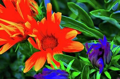 Photograph - Magical Flowers by Joe Burns