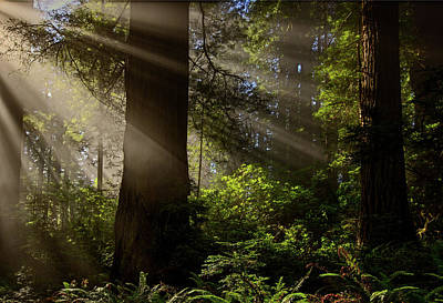 Photograph - Magical Forest 2016 by Ralph Nordstrom