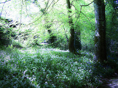 Blarney Castle Photograph - Magical Forest At Blarney Castle Ireland by Teresa Mucha