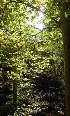 Photograph - Magical Forest Beginning Of Fall by Irina Sztukowski