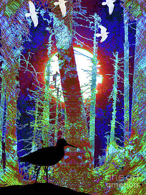Photograph - Magical Forest by Robert Ball