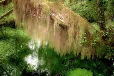 Olympic Peninsula Photograph - Magical Hall Of Mosses - Hoh Rain Forest Olympic National Park Wa Usa by Christine Till