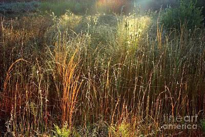 Florida Photograph - Magical Light On The Marsh by Carol Groenen