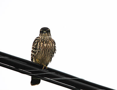 Photograph - Magical Merlin by Debbie Oppermann