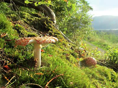 Magical Mushrooms 1 Art Print