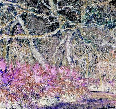 Photograph - Magical Mystery Forest 1 by John Hintz