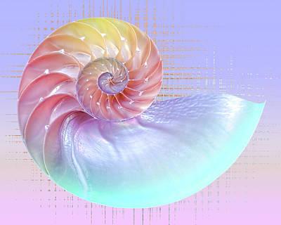 Seashells Photograph - Magical Pastels by Gill Billington
