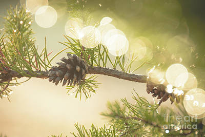 Photograph - Magical Pine Branch by Cheryl Baxter