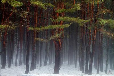Photograph - Magical Pines by Betty Pauwels