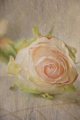 Peach Photograph - Magical Rose by Pamela Williams