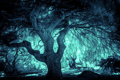 Photograph - Magical Tree Ir by Lilia D