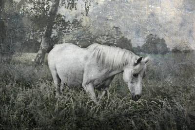 Animals Photos - Magical View by Joachim G Pinkawa