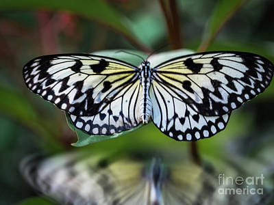 Photograph - Magical Wings by Robin Zygelman