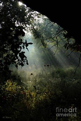 Photograph - Magical Woodland Lighting 02 by Arik Baltinester