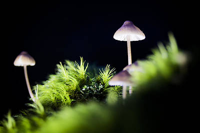 Photograph - Magical World Of Mushrooms by Windy Corduroy