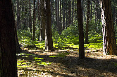 Photograph - Magical Yosemite Forest by JoDee Luna