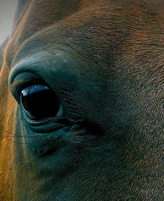 Chestnut Paint Horse Photograph - Magics Beauty by LKB Art and Photography