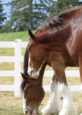 Magnificant Horses - The Clydesdales -4 Print by Diane M Dittus