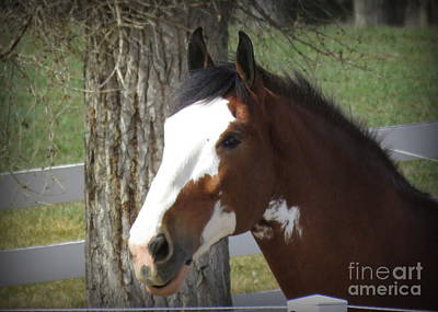 Magnificant Horses - The Clydesdales -7 Print by Diane M Dittus