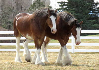 Magnificant Horses - The Clydesdales -9 Art Print