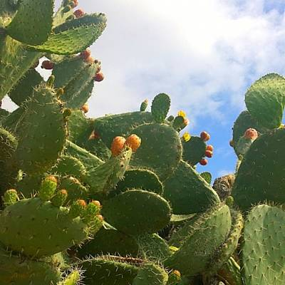Garden Photograph - Magnificent #cactus With New Buds And by Shari Warren