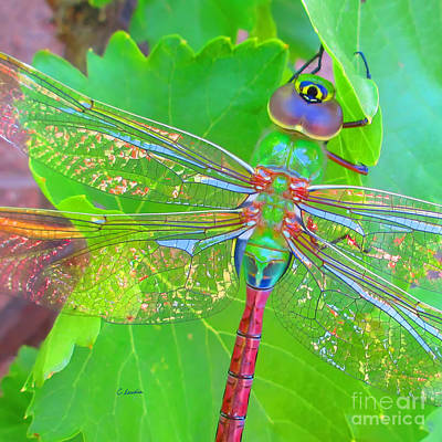 Photograph - Magnificent Dragonfly - Square Macro by Claudia Ellis