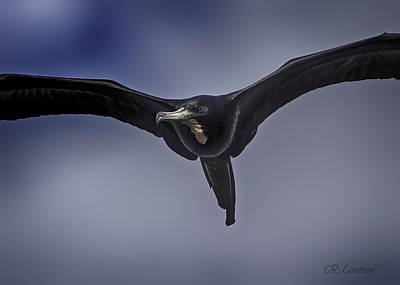Photograph - Magnificent Frigatebird by CR Courson