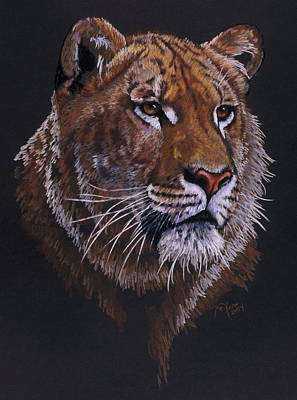 Liger Drawing - Magnificent Liger by Barbara Keith