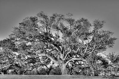 Photograph - Magnificent Oak by David Bearden