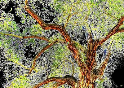 Photograph - Magnificent Tree by Will Borden