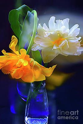 Still Life Royalty-Free and Rights-Managed Images - MAGNIFICENT TULIPS in GLASS VASE. by Alexander Vinogradov